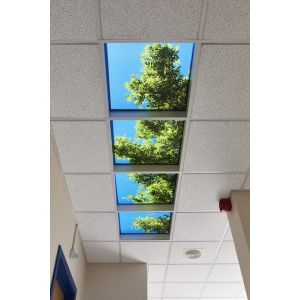 41102 Ceilingscape - Summer Branches